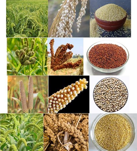 pearl millet nutrition facts besto blog