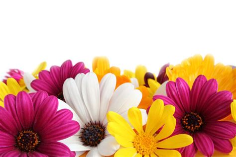 Flower Image Flowers