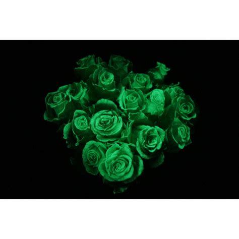 glow   dark roses halloween flower muse
