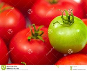 Red Ripe Tomatoes And One Green Tomato Royalty Free Stock ...