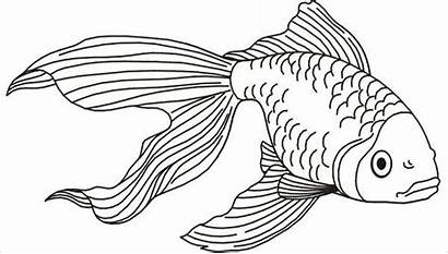 Fish Coloring Pages Printable Animal Sheets Colouring
