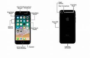 Apple Iphone 7    7 Plus Diagram