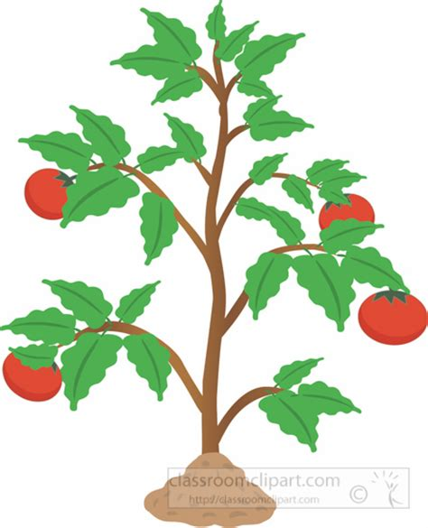 Plant Clip Shrub Clipart Tomato Pencil And In Color Shrub Clipart