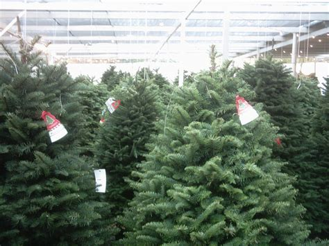 best places to buy christmas trees in montreal without