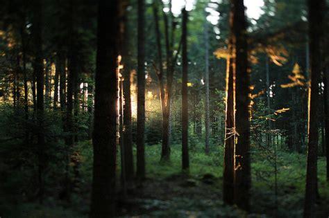 amazing  cinemagraph photography yvelle design eye
