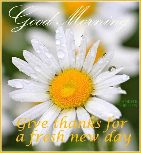 Good Morning Wishes With Flowers Pictures, Images  Page 25