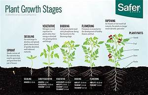 Safer U00ae Brand Grow Schedules