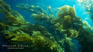 Underwater Ocean Plants - Bing images