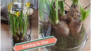 Frühlingsdeko Im Glas : fr hlingsdeko 2018 narzissen im glas homedeko narzissen fr hlingsdeko 2018 youtube ~ Orissabook.com Haus und Dekorationen