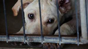 The gallery for --> Sad Dogs In Shelters