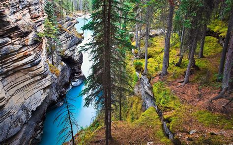 Nature Landscape River Canada Forest Grass Trees