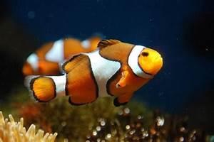 Die Besten Aquarien : die besten 25 aquarium fische ideen auf pinterest ~ Lizthompson.info Haus und Dekorationen