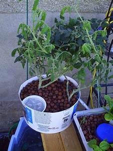 Aquaponics For People On A Budget