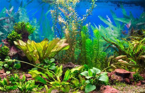 nettoyer aquarium 233 fr 233 quences et comment faire