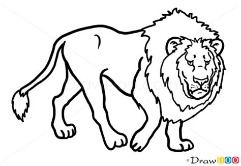 draw lion wild animals
