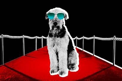 Dog Trainer Observer