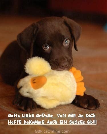 gaestebuchgruesse bilder gaestebuchgruesse gb pics seite