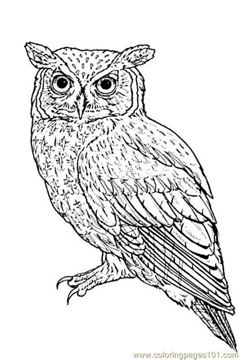 owl coloring pages  getcoloringscom  printable colorings pages  print  color