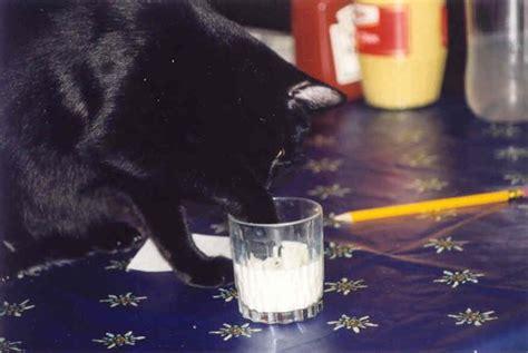 chats carte la souris dans la cuisine notre histoire
