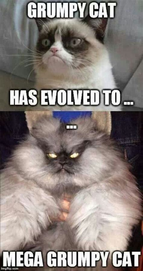 Grumpy Cat Meme - obama grumpy cat quotes quotesgram