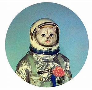 Cat Astronaut (page 4) - Pics about space