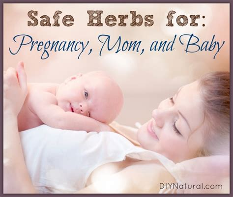 pregnancy herbs safe baby mom oils essential healthy during natural mothers babies quotes pregnant diynatural cleaning expectant moms recently doing