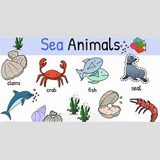 Learn Names Of Sea Animals In English  Esl Buzz