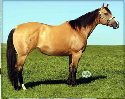 quarter horse horses frenchman mare tsln frenchmans ranch frenchgirl oh