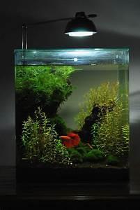 Die Besten Aquarien : die besten 25 aquarium bett ideen auf pinterest fisch ~ Lizthompson.info Haus und Dekorationen