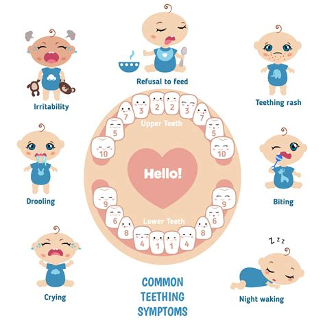 Baby Teething Signs Symptoms Remedies And Faqs St
