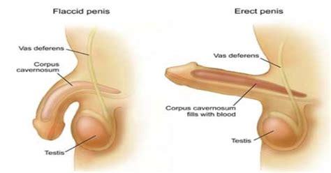 comment se masturber chez la femme
