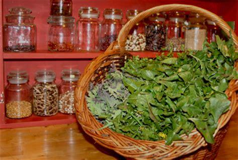 cuisine sauvage couplan le goût des plantes liste des plantes sauvages à cuisiner