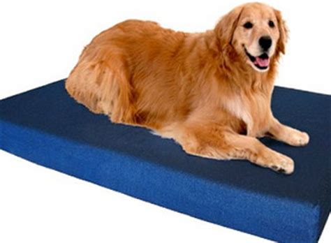 dog beds buying guide and reviews