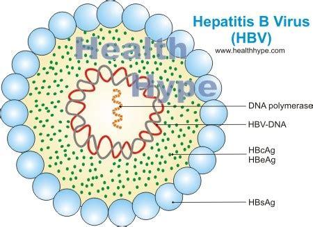 Hepatitis B Virus (HBV) Antigen, Antibody, Vaccine ...