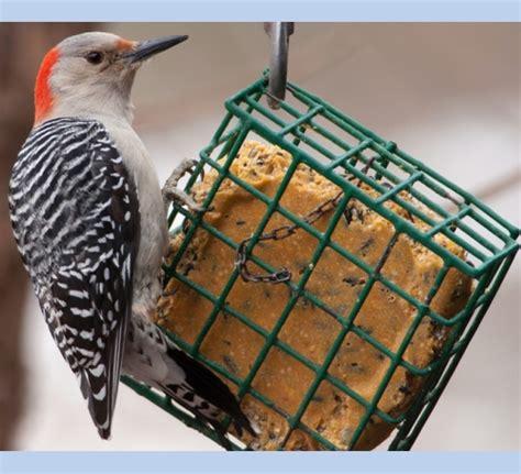 suet bird food high energy suet the bird man