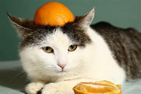 my cat likes oranges