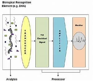 A Schematic Diagram Shows Basic Biosensor Assembly With A