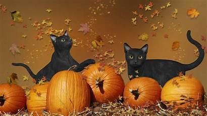 Halloween Cat Wallpapers