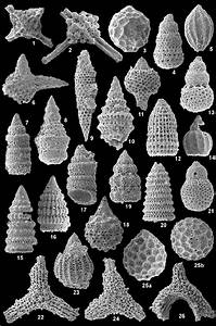 Late Jurassic And Earliest Cretaceous Radiolarians From