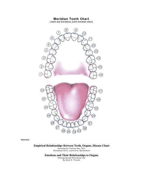 images  tooth chart printable full sheet dental chart teeth numbers meridian tooth
