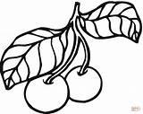 Cherry Coloring Plum Cherries Leaves Pages Fruit Fruits Stem Printable Orange Kolorowanka sketch template