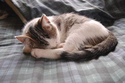 Why Dogs And Cats Sleep Curled Up  The Pet Wiki