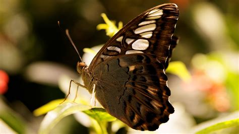 butterfly gray flowers nature insects 29302 brown