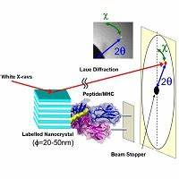 Antigen complex single molecule observation with X-rays ...