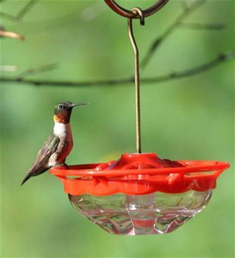 birds unlimited hummingbird feeder birds unlimited the zen and birds on