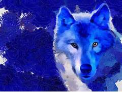 Colorful Wolf Paintings Abstract Colorful Wolf  Colorful Wolf Painting