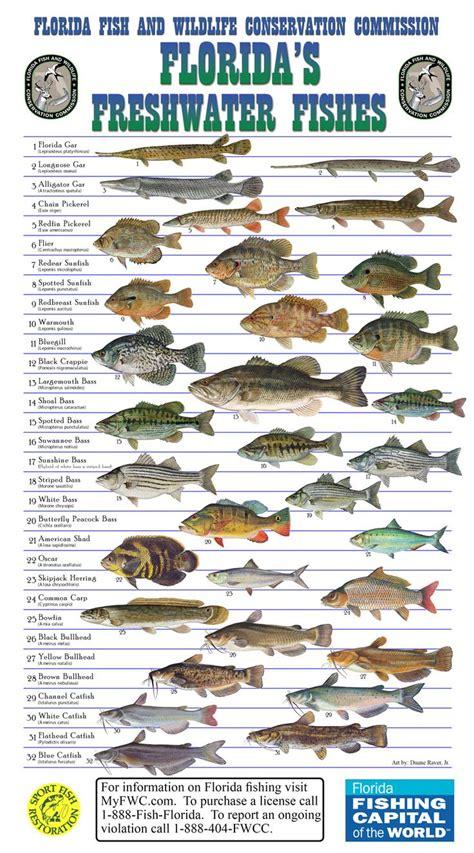 florida native freshwater fish fishing pinterest
