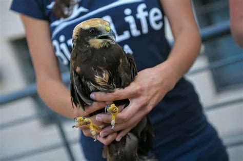 updated birdlife retrieve another four injured protected
