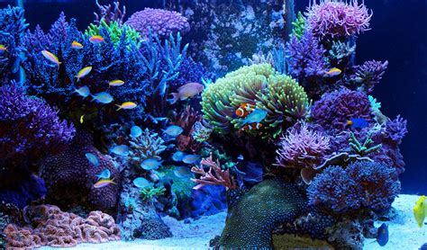 Reef Tank / Coral Aquarium - The Aquarium Setup
