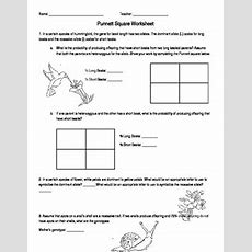 Punnett Square Worksheet By Amanda Behen  Teachers Pay Teachers